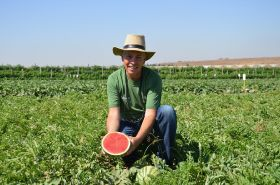 Hazera taps into mini-watermelon potential