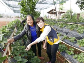 Project brings Vietnamese vegetables to market