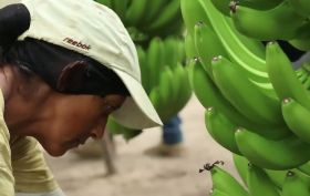 New film celebrates fairtrade bananas