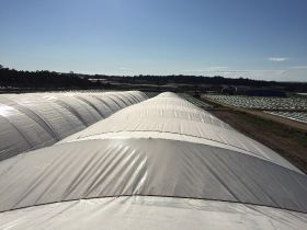 Piñata Farms expands polytunnel production