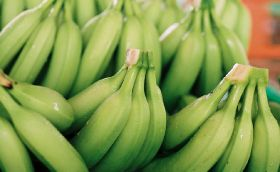 FAO launches banana industry resource