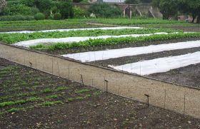 AccorHotels to plant veg gardens