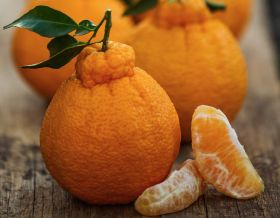 Sumo Citrus to go nationwide