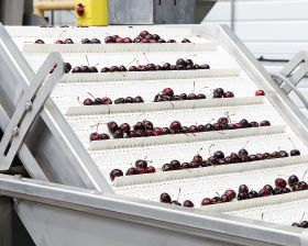 Ackio invests in 'Europe-beating' cherry packing line