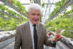 Grower installs new strawberry growing system