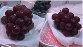 Japanese grape exports on the up