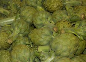 Brittany artichoke growers use expertise