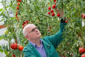 Science breakthrough boosts tomatoes