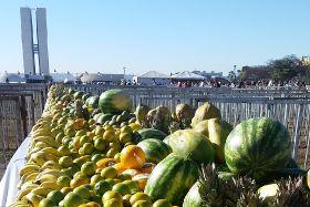 Brazilian mangoes lengthen RSA season