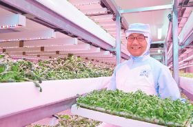 Japanese farms benefit from LED lighting