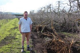 End of era for Hawke's Bay's oldest apples
