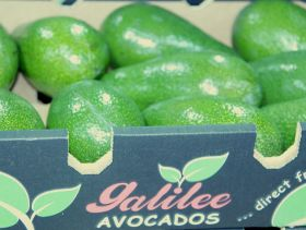 Avos show promise in Israel