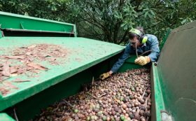 Revised forecast for Australian macadamias