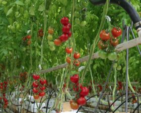 P'Petual Holdings expands greenhouse facility
