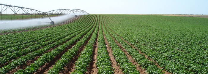 South Australia to host 2023 World Potato Congress