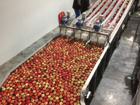 Rosy prospects for English apples