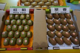 Chinese kiwifruit 'can compete' in global market