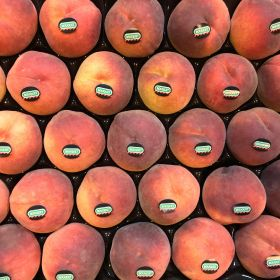 Spain limbers up for new stonefruit campaign