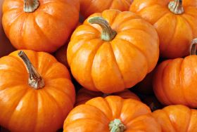 Halloween brings scarily large pumpkin selection