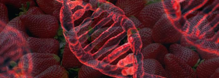 Scientists hail strawberry genome breakthrough