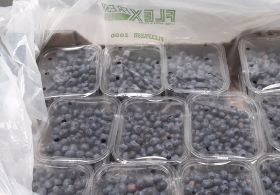 Uflex hones in on LatAm blueberry trade