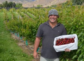 Freshmax NZ launches cherry campaign