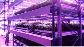 Tech firm opens new vertical farm