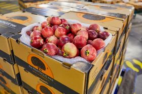Australian nectarines ready to roll