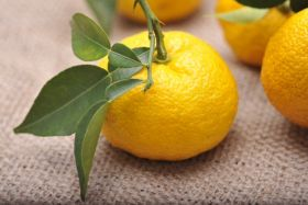 Singapore gets a taste of Kochi citrus