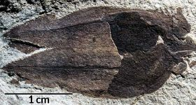 Rare fossilised fruit found in Patagonia