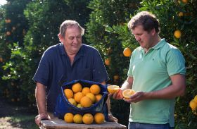 BEE citrus project breaks the mould
