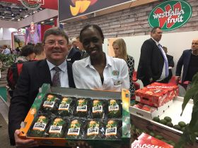 Greencell to launch 'gourmet' avo varieties