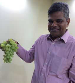 Grape start for Indian export deal