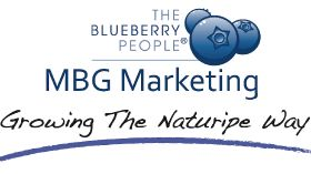MBG Marketing goes global