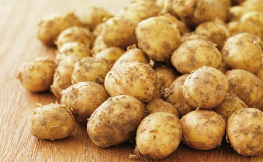 First Jersey Royals arrive at Sainsbury's