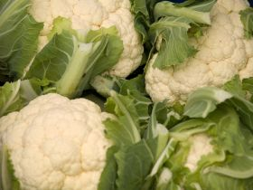 Bitterness 'important for pest control' in veg