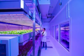 Indoor growing 'allows less disease-resistant varieties to thrive'