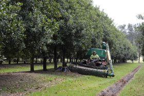 Australian macadamias exceed expectations