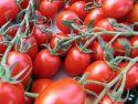 Tomatoes' taste test