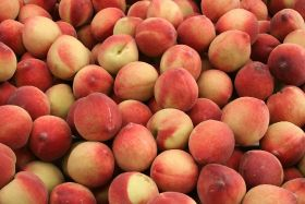 France welcomes peach and nectarine forecast