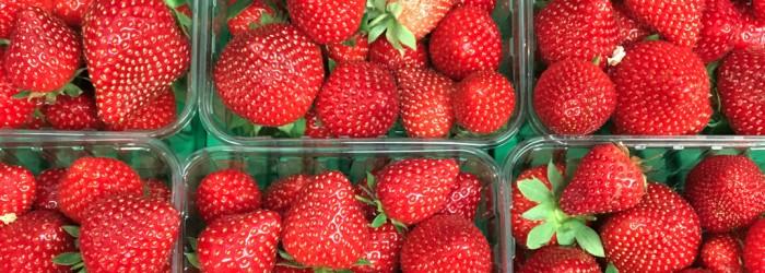 Macfrut: chance to shine for Italian strawberries