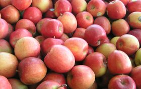 NZ pipfruit crop down on forecast