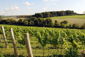 Waitrose expands its vineyards