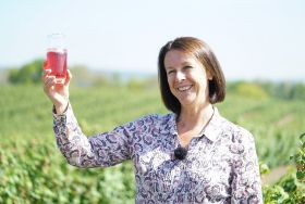 New variety pays off for blackcurrants