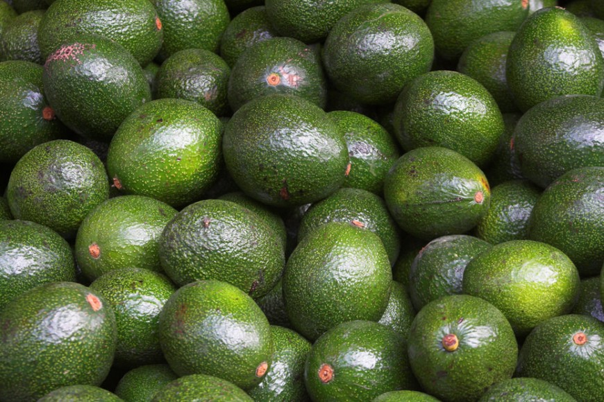 Avocado shortages likely in Europe