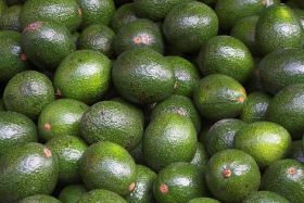 South Africa anticipates excellent avo crop