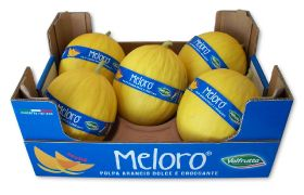 Meloro: golden opportunity for melon market