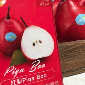 Piqa Boo and Angelys ready for export