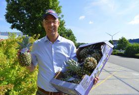 Organic pineapples turn heads