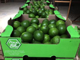 Colombian organic fruit exports to EU climb